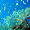 Red-sea-Diving -Dahab-Egypt10