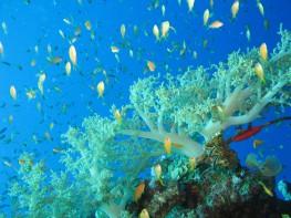 Red-sea-Diving -Dahab-Egypt10